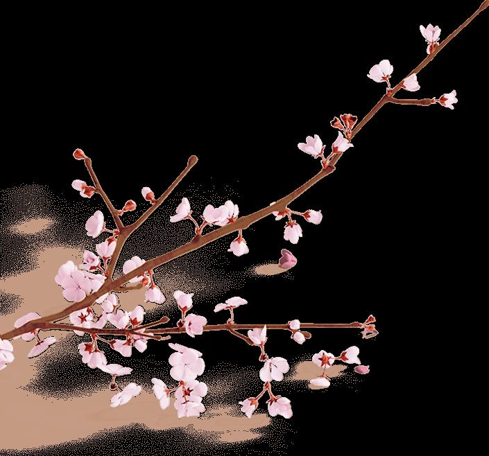 Branche de cerisier en fleur pour Contact