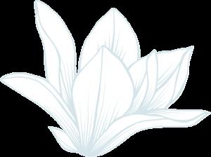 Fleurs magnolia en illustration en Soirée
